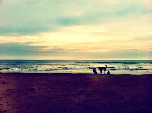 На пляже остались одни собаки
