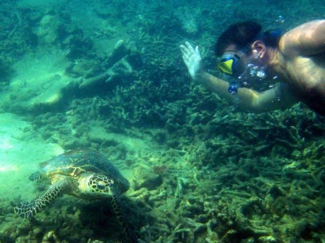 заплыв с черепахами