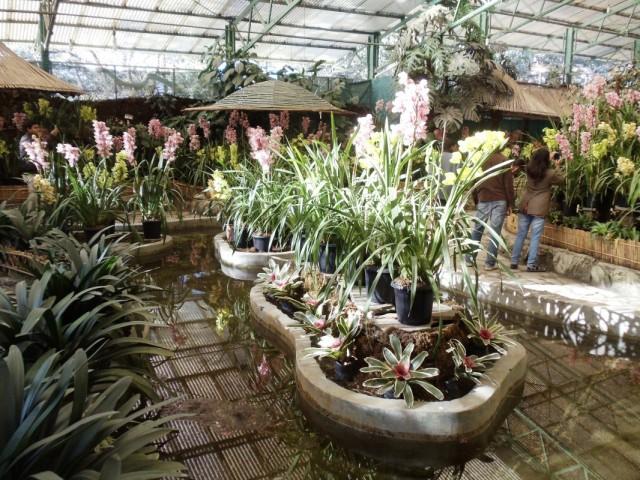 все цветы - орхидеи