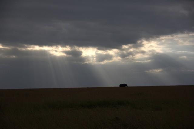 закат в Маасай Мара