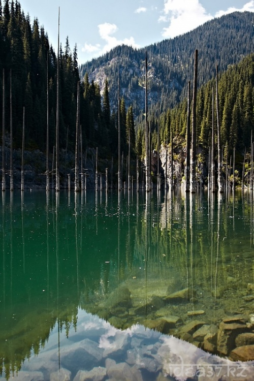 Торчащие из воды елки
