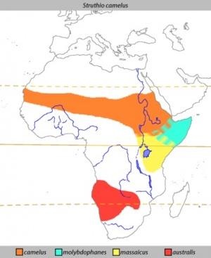 Ареал обитания самых больших птиц - африканских страусов :-)
