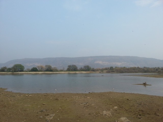 озеро с крокодильчиками