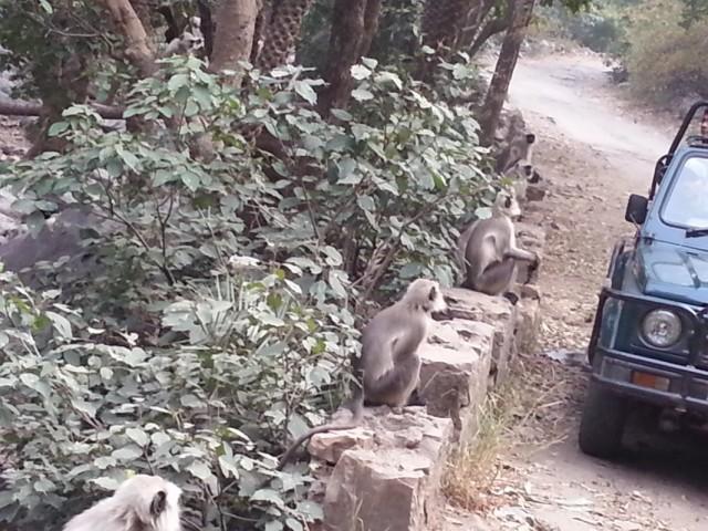 обезьянки смеются над нами)
