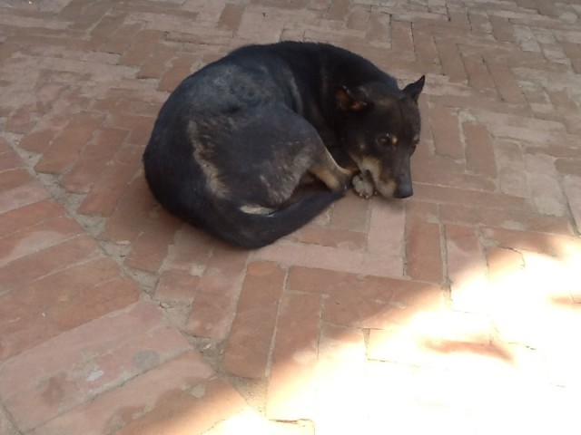 Собак 2
