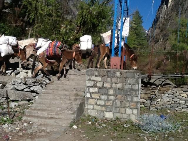 Вот мулы создали пробку на мост