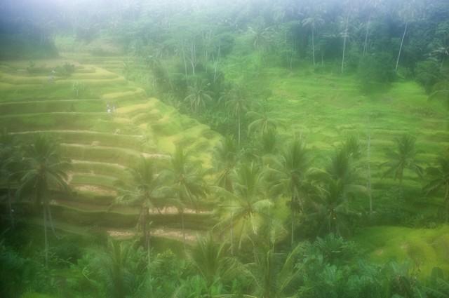 Рисовые поля-террасы сквозь запотевший объектив