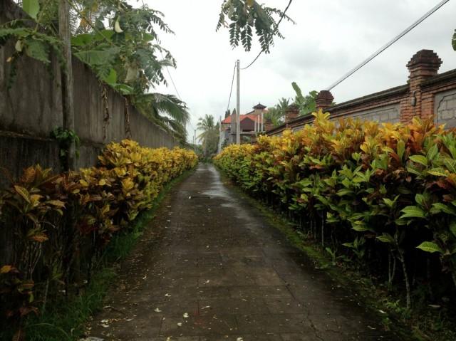 Прогулки 11