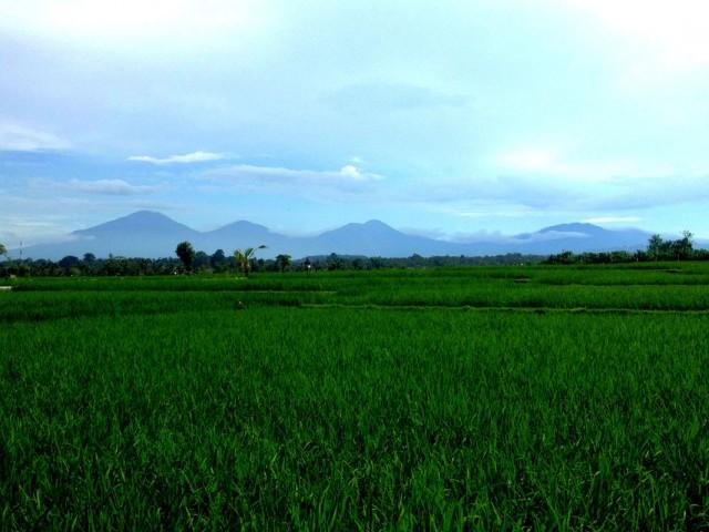 Trip to Jatiluwih Rice Fields 01