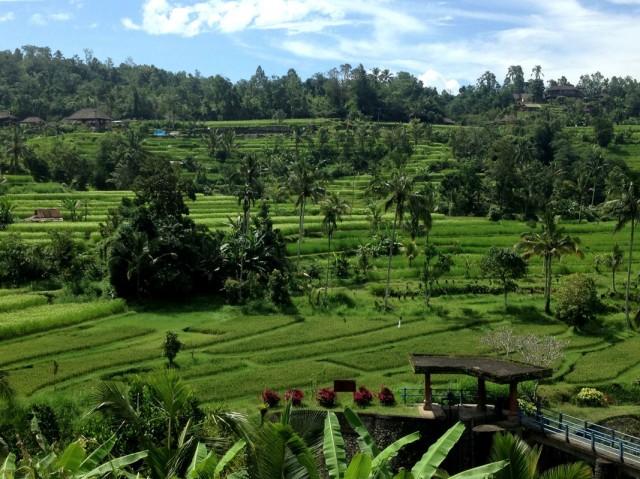 Trip to Jatiluwih Rice Fields 03