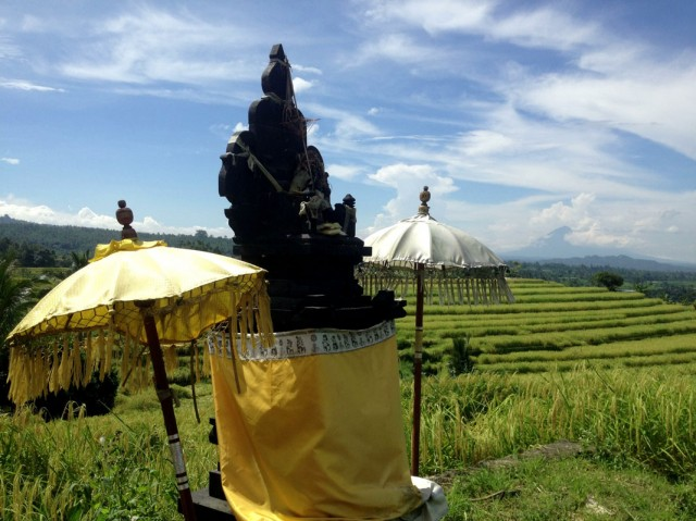 Trip to Jatiluwih Rice Fields 05
