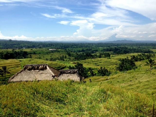 Trip to Jatiluwih Rice Fields 06