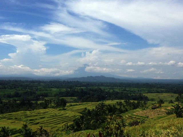 Trip to Jatiluwih Rice Fields 08