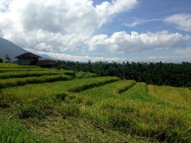 Trip to Jatiluwih Rice Fields 09