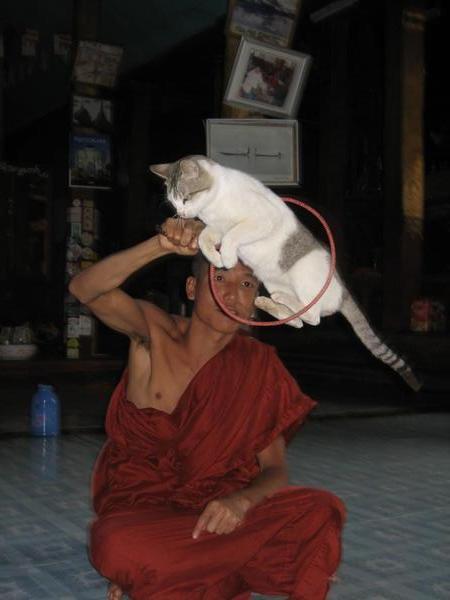 Прыгающие коты