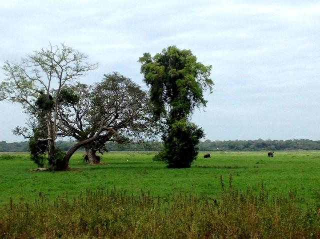 Дикие слоны на горизонте