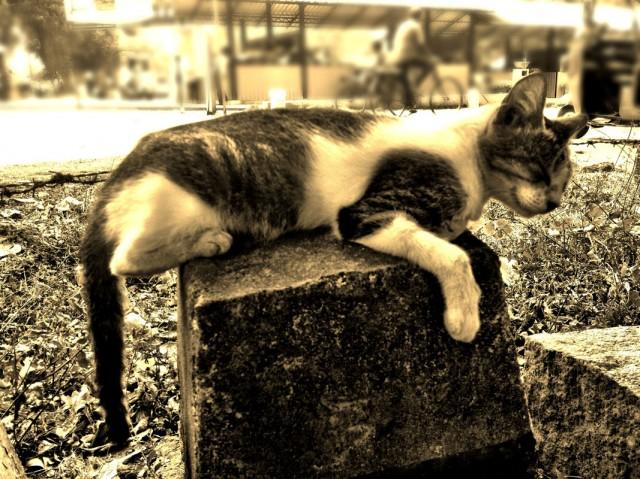 Коты Анурадхапуры