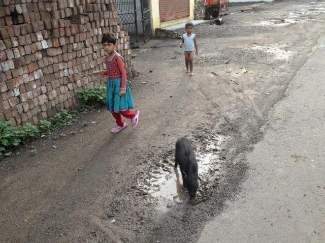 Детки и свинки