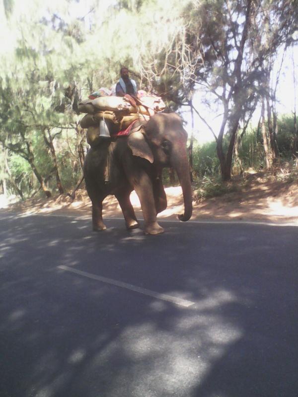 слоник бредущий из порбандара