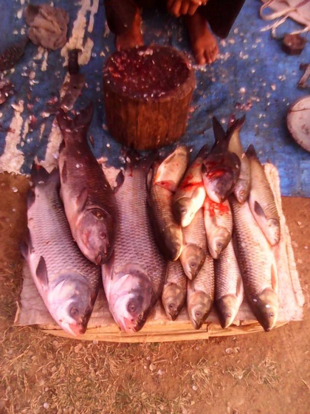 рыб пресноводный