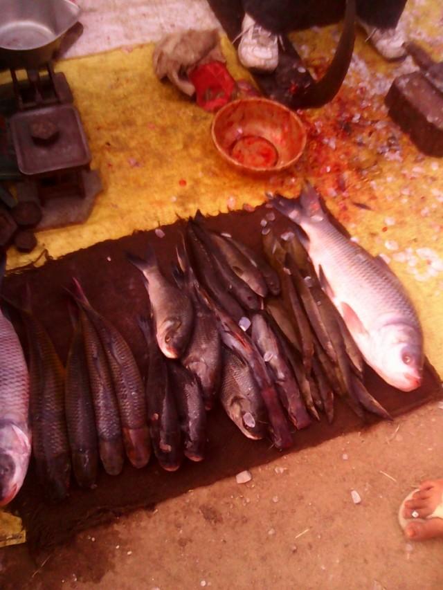 рыб. пресноводный. коджурахо.