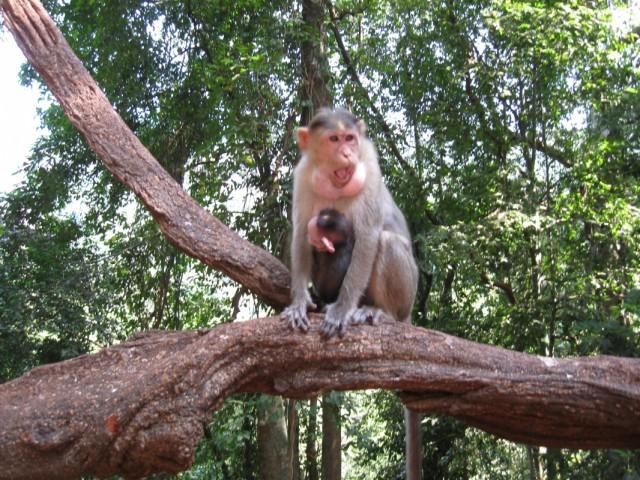 обезьяна с детёнышем