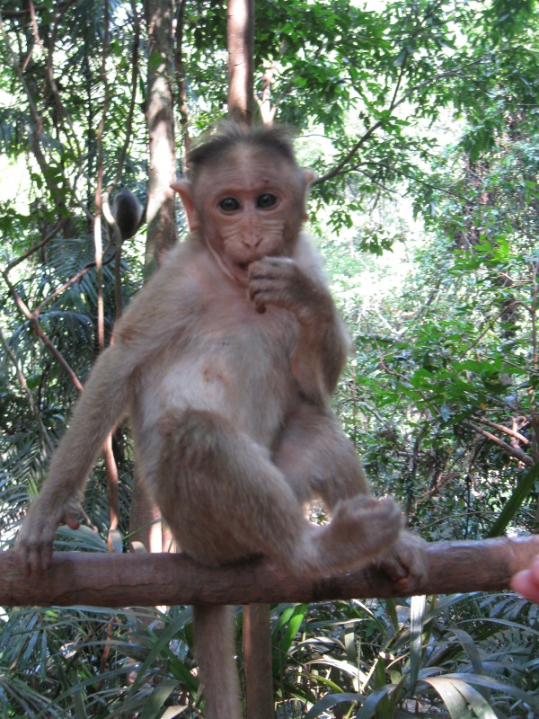 детёныш обезьяны
