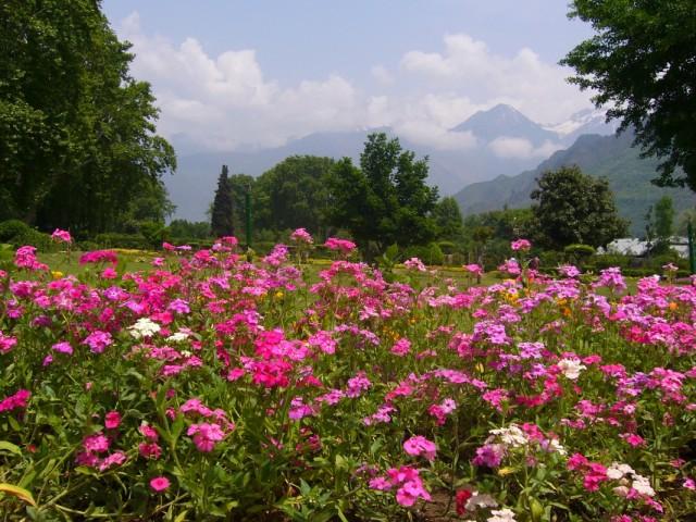 Кашмир полон цветов