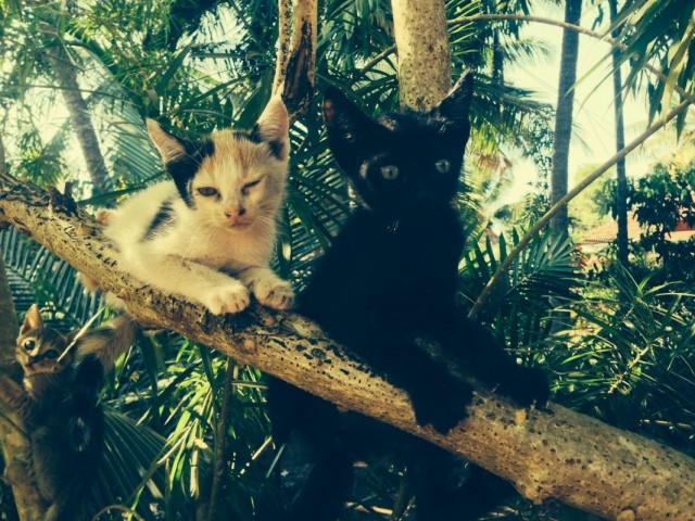 Гигантские древесные микро-коты