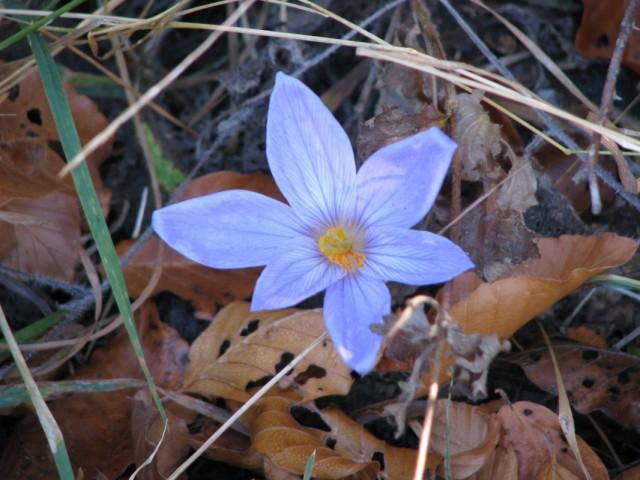 цветочек для Нади