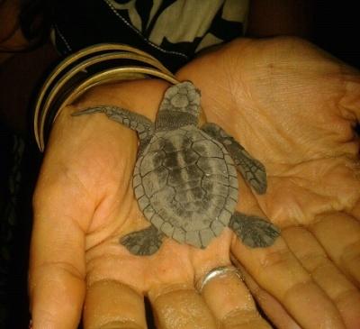 Новорожденный в моих руках