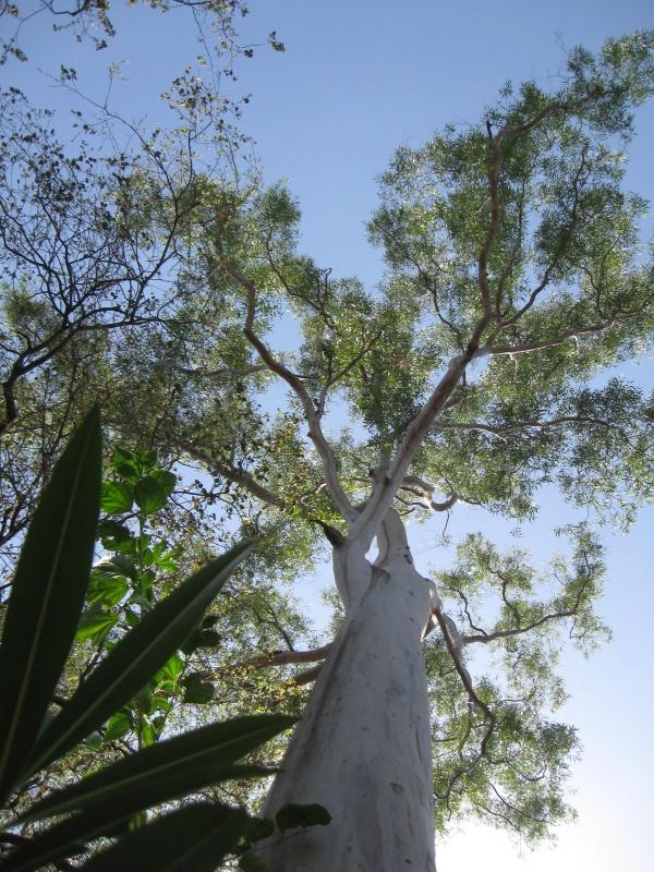 Дерево на вершине