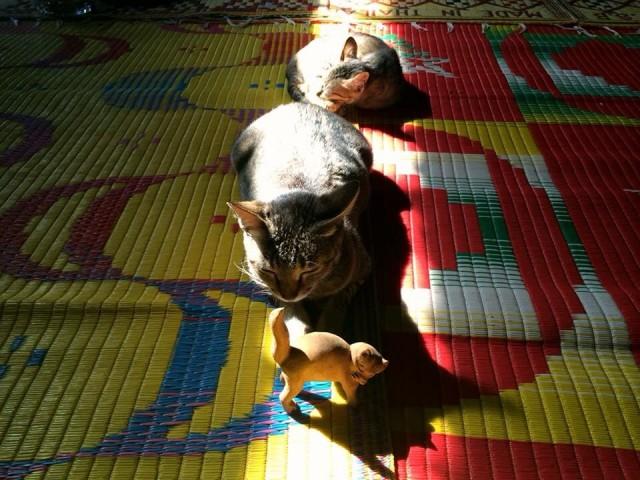 Jumping cat monastery 2