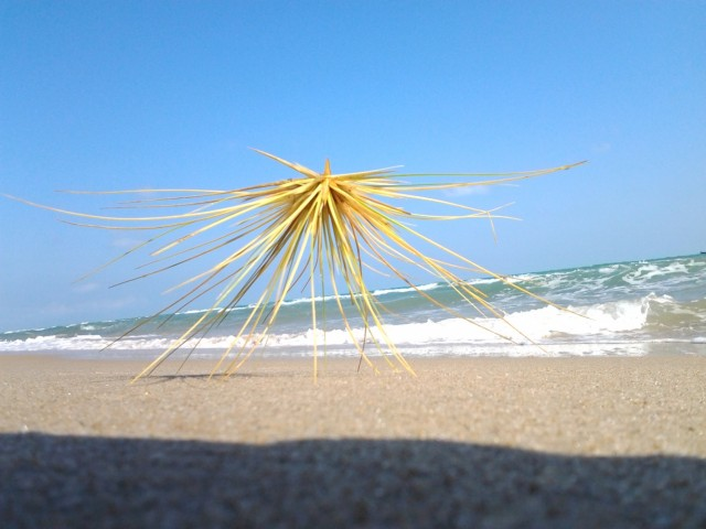 Перекати море