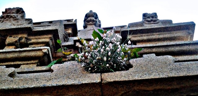 Цветы читателям
