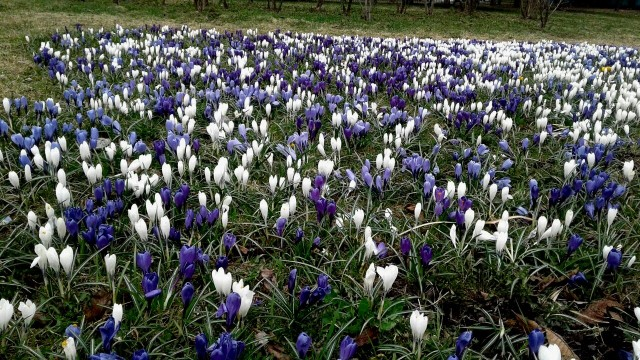 в саду напротив уже проросли цветы