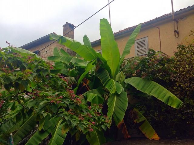 Черногорские бананы