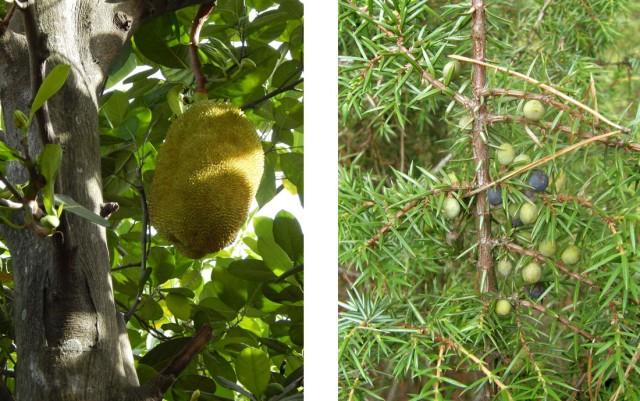 У них экзотические плоды. Ну, так они и у нас есть!