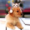 ну еще один котик и все!