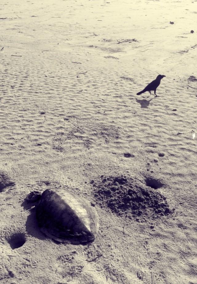 Ворона и черепаха