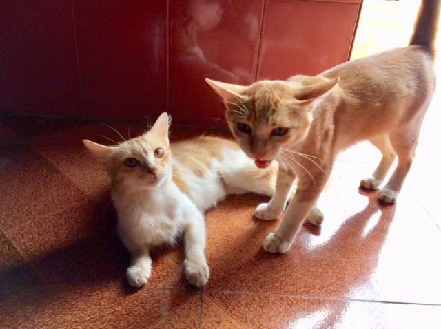 Манюня и Муняня. Брат с сестрой, наши новые прихожане. Очень ласковые, похоже, в сезон дождей жили с иностранцами.