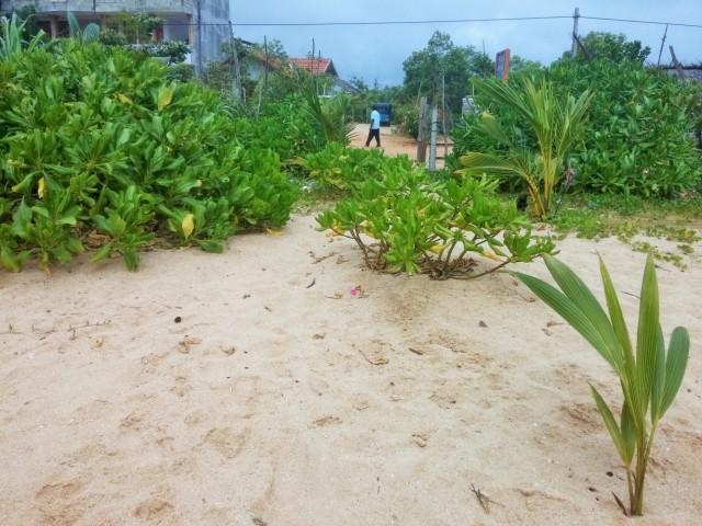 Пляж Рекава, Тангале (Rekawa beach, Tangalle)