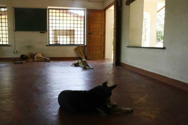 собаки и учеба