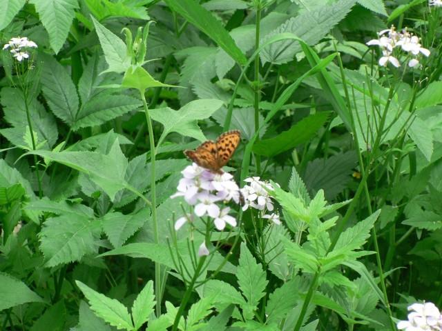 И бабочки