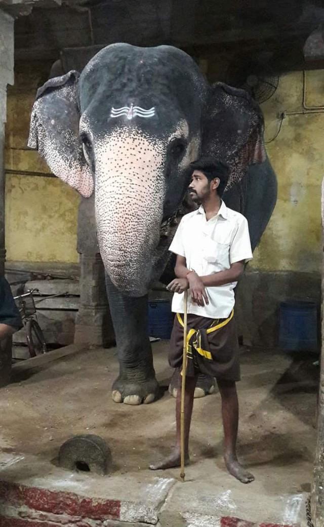 Храмовый слон приветствовал всех у Rock Fort Temple