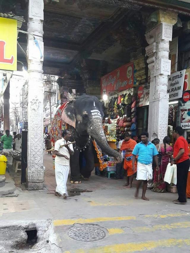 Садху кормит слона