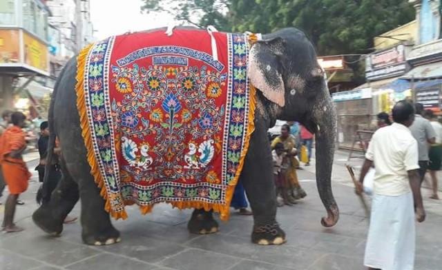 Храмовый слон