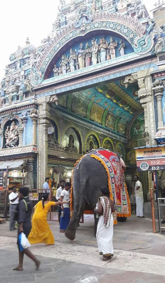 Женщина в желтом сари не упустила свой шанс дотронуться до благословенного слона