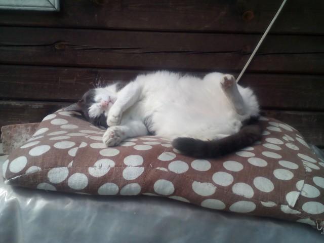 Спокойный сон кота пенсионера.