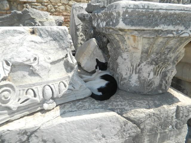 эфеские коты
